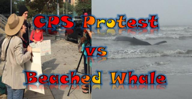 protest vs whale